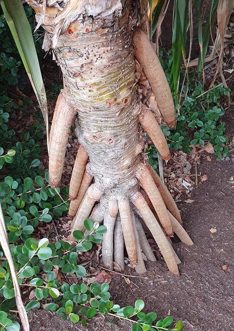 penisuri australia