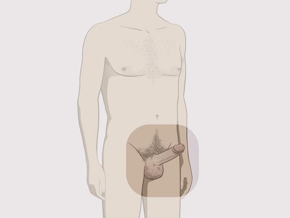 ce vitamina este necesară pentru creșterea penisului vrea și nu vine erecția