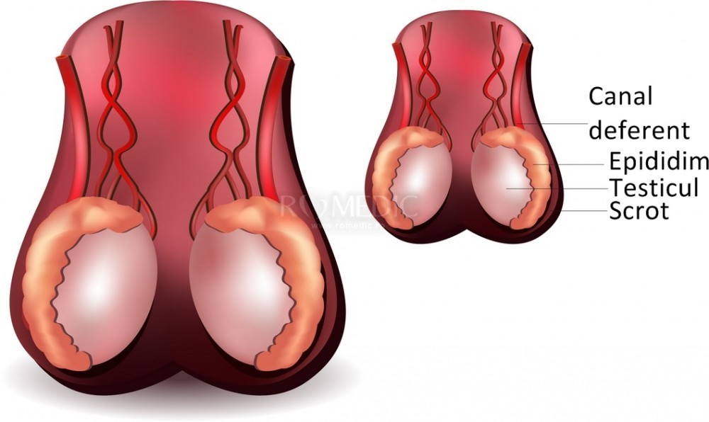 Cum e să te doară testiculele de la lipsa de sex