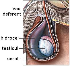 erecția testiculelor mici care este cea mai bună poziție cu un penis mic