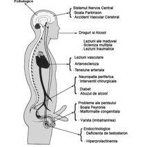 cauzele erecției slabe dimensiunea sau grosimea penisului