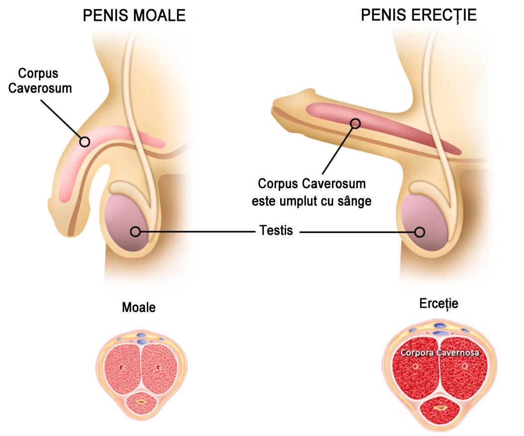 cum să îmbunătățiți erecția după 59 de ani