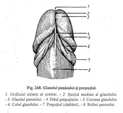 produse de susținere a erecției erecție și urinare