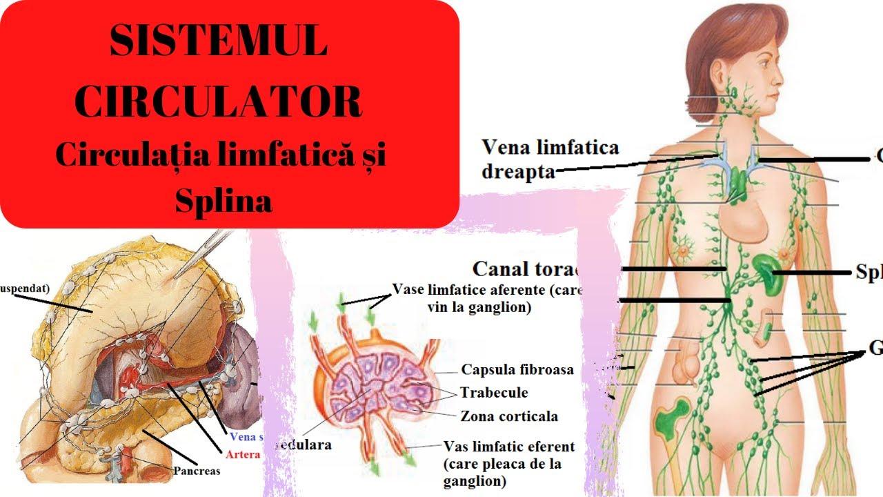 condiloame ganglioni limfatici