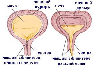 nu există erecție din afobazol exerciții de erecție cu femeie