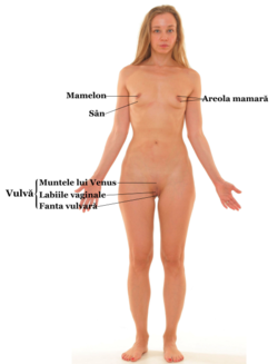 Sistemul genital masculin